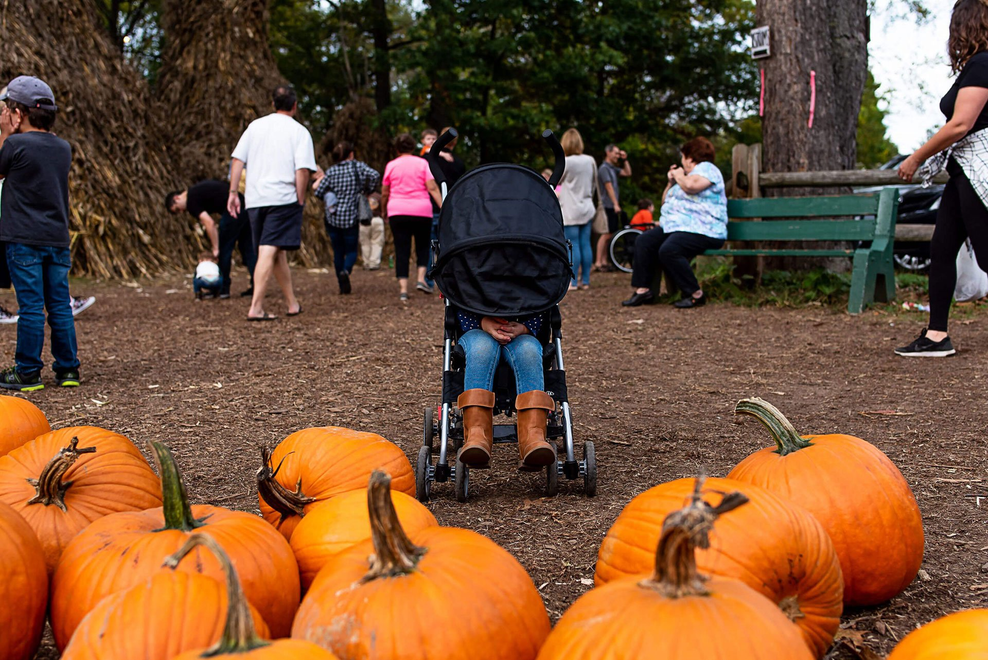 Child with stroller hood over face in pumpkin patch